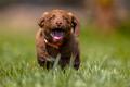 Playful dog running in the garden