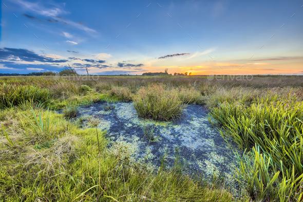 Marshland landscape in Onlanden - Stock Photo - Images