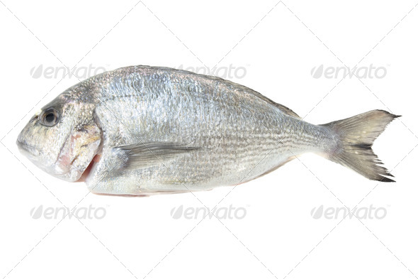 Dorada seafood isolated on white background. Also known as bream sea fish. Raw food. - Stock Photo - Images