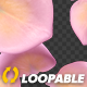 Pink Yellow Rose Petals - Falling Loop