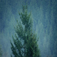 Misty Forest In Rainfall - VideoHive Item for Sale