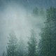 Rain And Mist In Wilderness Forest - VideoHive Item for Sale