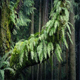 Ferns On Old Trunk In Breeze - VideoHive Item for Sale