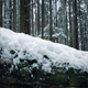 Passing Snow Covered Log In Forest - VideoHive Item for Sale