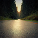 Moving Over Forest Road At Sunset - VideoHive Item for Sale