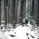 Pretty Winter Forest In Snowfall - VideoHive Item for Sale