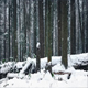 Moving Past Woodland In The Snow - VideoHive Item for Sale