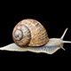 Snail - VideoHive Item for Sale
