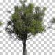 African Olive Trees - VideoHive Item for Sale