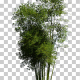 Bamboo Trees - VideoHive Item for Sale