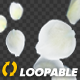 White Rose Petals - Falling Loop - VideoHive Item for Sale