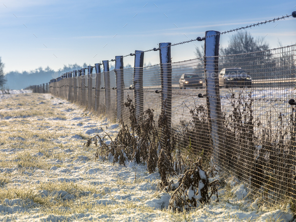 Wildlife fence along dutch highway - Stock Photo - Images