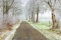 Frosty frisian winter road