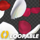 Red and White Rose Petals - Falling Loop