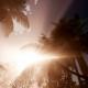 Sunset Beams Through Palm Trees