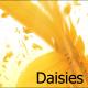 Daisy Flowers Falling