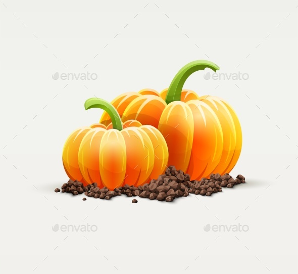 Ripe Pumpkin Vegetables at Soil Autumn Harvest - Vectors