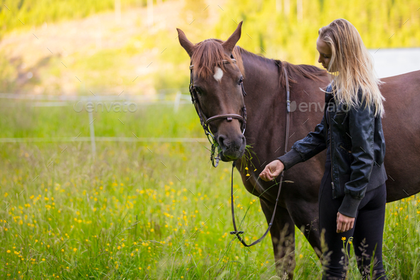 Woman feeding her arabian horse with snacks in the field - Stock Photo - Images