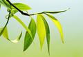 close up of fresh green foliage - PhotoDune Item for Sale