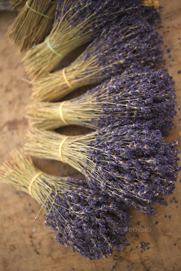 Bunches of lavender - Stock Photo - Images