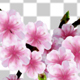 Sakura Alpha 02