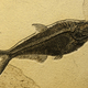 Sea fish fossil. - PhotoDune Item for Sale