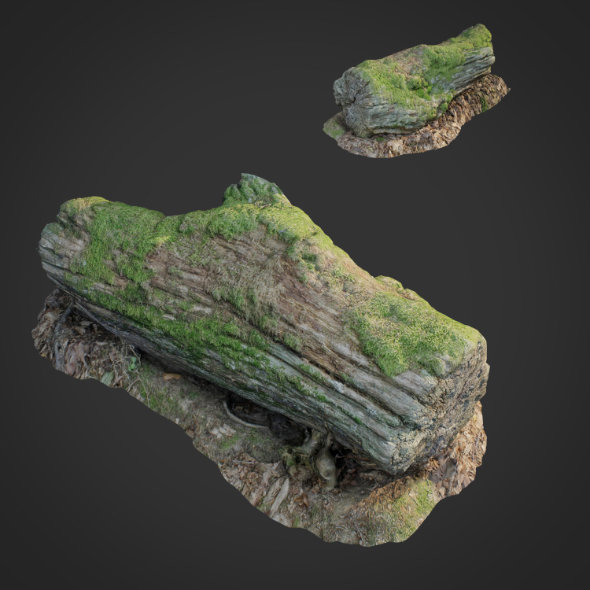 3DOcean 3D scanned nature forest stuff 001 20633335