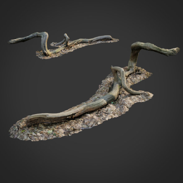 3DOcean 3D scanned nature forest stuff 002 20633358