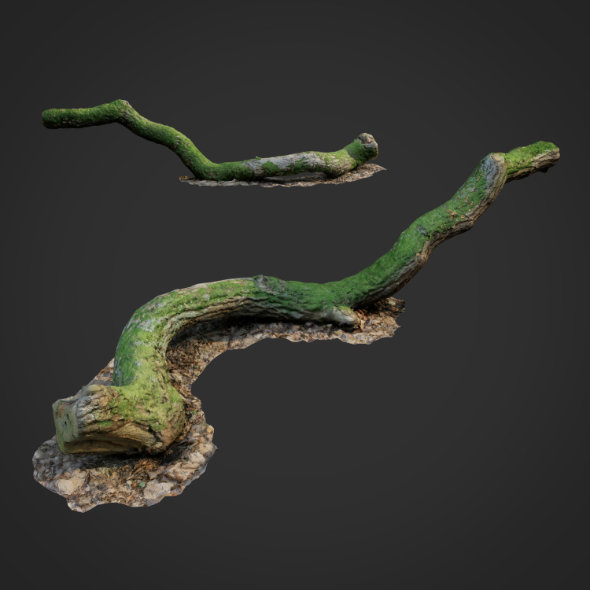 3DOcean 3D scanned nature forest stuff 003 20633380