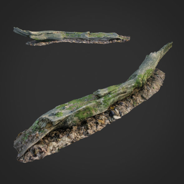 3d scanned nature forest stuff 004 - 3DOcean Item for Sale