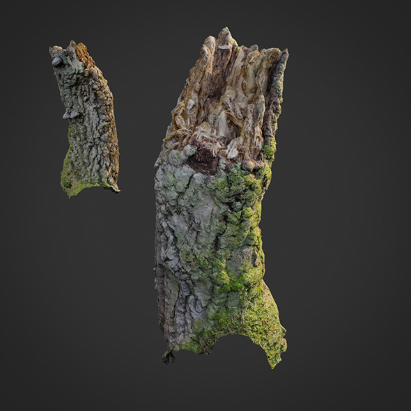 3d scanned nature forest stuff 007 - 3DOcean Item for Sale