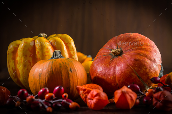 Pumpkin still life for Thanksgiving - Stock Photo - Images