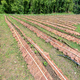 Strawberry plantation in Thailand - PhotoDune Item for Sale