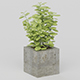 Vray Ready Potted Plant
