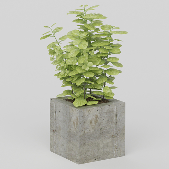 3DOcean Vray Ready Potted Plant 20635698