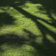 Tree shadow on grass field - PhotoDune Item for Sale