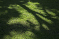 Tree shadow on grass field - PhotoDune Item for Sale