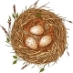 Three Eggs in a Nest.