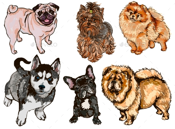 Set of Illustrations of Different Dogs