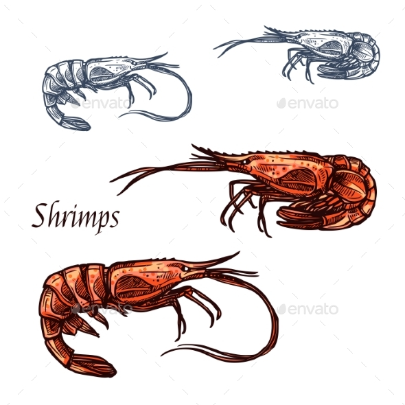 Shrimp Prawn Seafood Vector Isolated Sketch Icon - Animals Characters