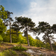 Pine growing on rocks against the blue sky - PhotoDune Item for Sale