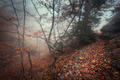 Trail through a mysterious dark old forest in fog. Autumn - PhotoDune Item for Sale