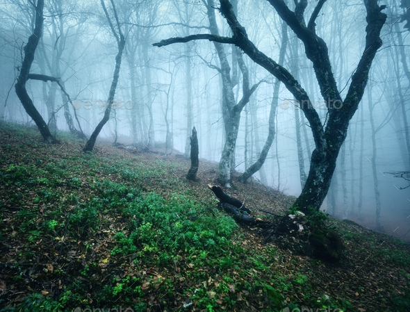 Trail through a mysterious dark old forest in fog. Autumn - Stock Photo - Images