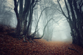 Mysterious dark autumn forest in fog with orange leaves, trees a - PhotoDune Item for Sale