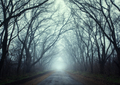 Mysterious dark autumn forest in fog with road, trees and branch - PhotoDune Item for Sale