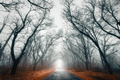 Mysterious dark autumn forest in fog with orange leaves, road, t - PhotoDune Item for Sale