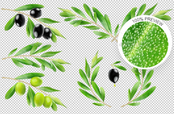 GraphicRiver Isolated Olive Branches 20648671