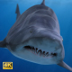Shark - VideoHive Item for Sale