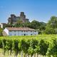 Castle of Torrechiara (Italy) and vineyard - PhotoDune Item for Sale