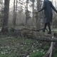 Girl Walks on the Fallen Tree - VideoHive Item for Sale